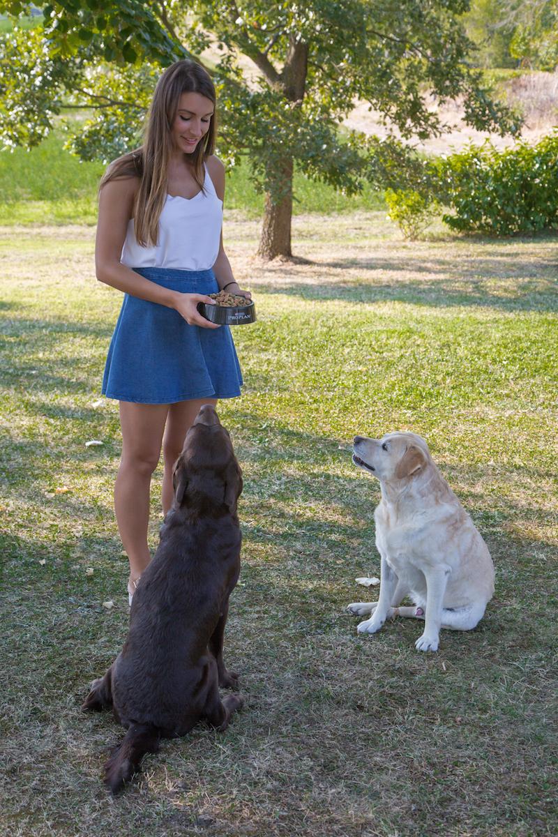 Purina alimentazione cani